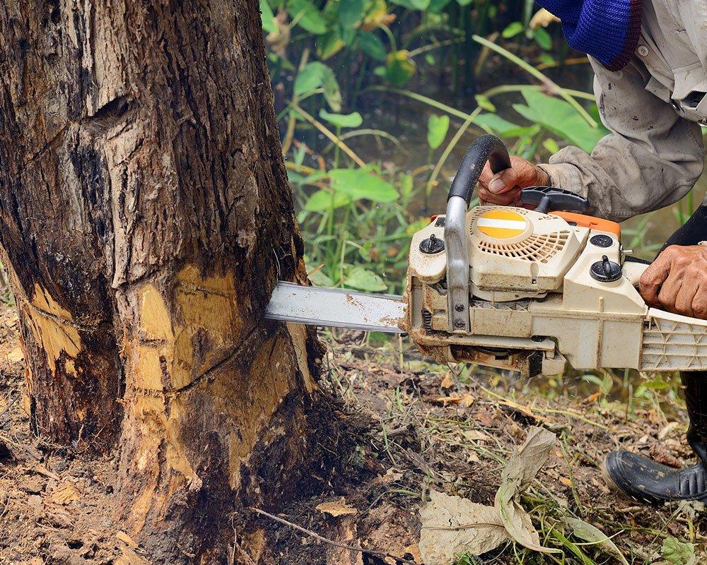 Tree Service Hampstead - Tree Removal