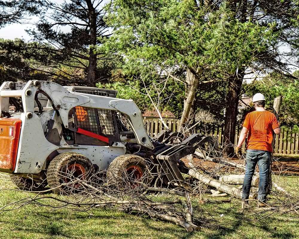 Tree Service Hampstead - Arborist