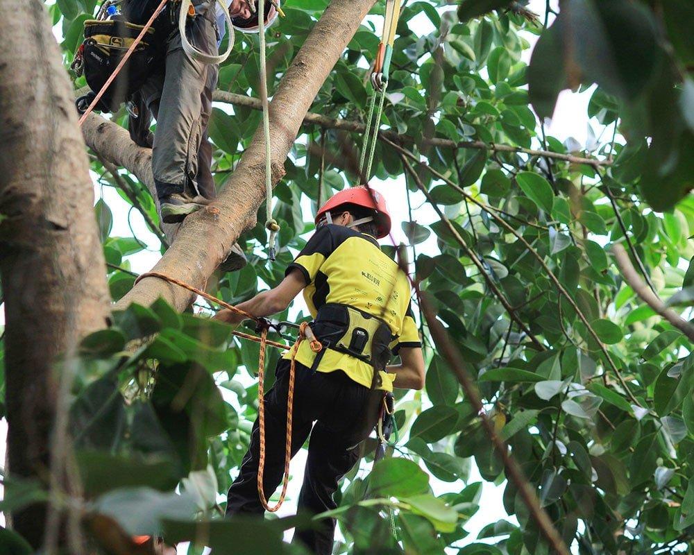Tree Service Hampstead - Emergency Tree Removal
