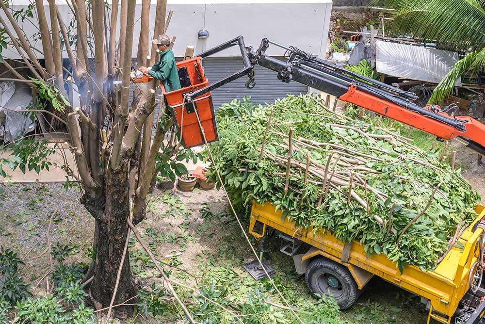 Tree Service Hampstead - Tree Pruning